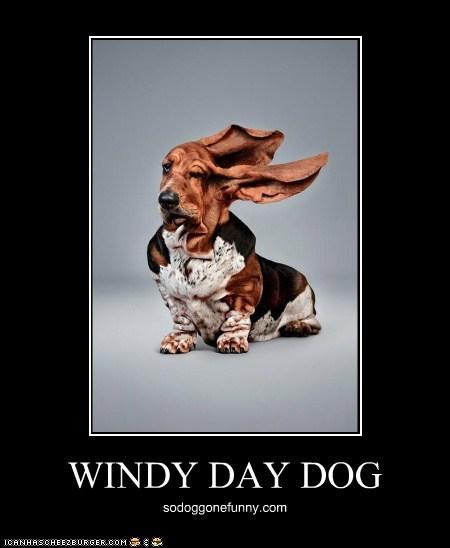 30374-windy day dog